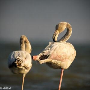 مراقبة الطيور هوايتي المنسية